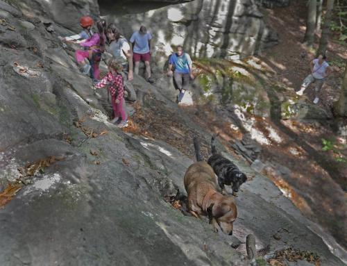 Ludvíkovské skalní město, stezka,pes, jezevčík